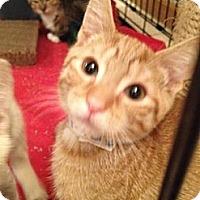 Adopt A Pet :: Ollie - East Hanover, NJ