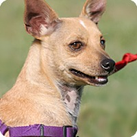 Adopt A Pet :: Rose - North Fort Myers, FL