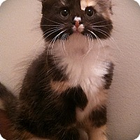 Adopt A Pet :: Keda & Kamille - Richmond, VA