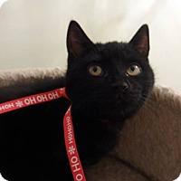 Adopt A Pet :: Boo - Colmar, PA