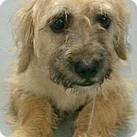 Adopt A Pet :: Ashby-Adoption Pending - Boulder, CO