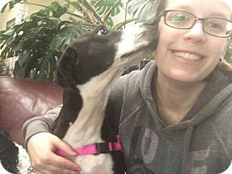 Pointer/Hound (Unknown Type) Mix Dog for adoption in Groton, Connecticut - Mossie