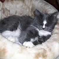 Adopt A Pet :: Donna - Hurricane, UT