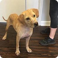 Adopt A Pet :: Sarah - Loxahatchee, FL