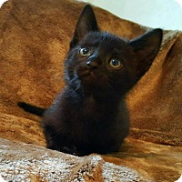 Adopt A Pet :: Mirage - Wilmington, NC