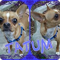 Adopt A Pet :: Tatum - Tampa, FL