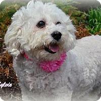 Adopt A Pet :: Sylvie - Independence, MO