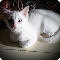 Adopt A Pet :: Arnie - Fairborn, OH