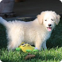 Adopt A Pet :: Loren - San Diego, CA