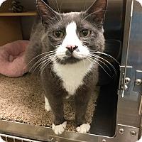Adopt A Pet :: Charlotte -Adoption Pending! - Colmar, PA