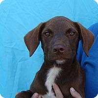 Adopt A Pet :: Flint - Oviedo, FL