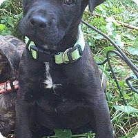 Adopt A Pet :: Miller - Dayton, OH