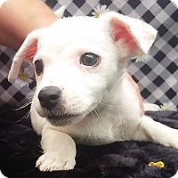Adopt A Pet :: Jinger - East Sparta, OH