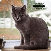 Adopt A Pet :: Biscuit - Monterey, VA