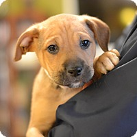 Adopt A Pet :: Cashmere - Fabric Litter - Acworth, GA