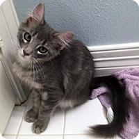Adopt A Pet :: Bitsie - Spring, TX