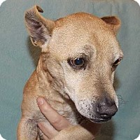 Adopt A Pet :: Vince - Halifax, NC