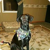 Adopt A Pet :: Axel - Mt. Laurel, NJ
