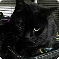 Adopt A Pet :: Alice - Port Huron, MI