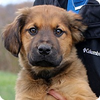 Adopt A Pet :: Lindy~adopted! - Glastonbury, CT