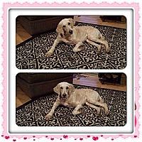 Adopt A Pet :: Jesse - Oak Brook, IL