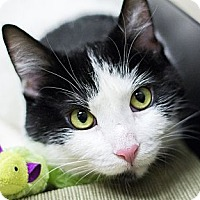 Adopt A Pet :: Bebe - Chicago, IL