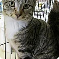 Adopt A Pet :: Bash - Seminole, FL