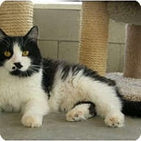 Adopt A Pet :: Lucky - Palmdale, CA
