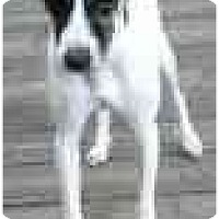 Adopt A Pet :: Beau Chien - Topeka, KS