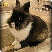 Adopt A Pet :: MoonPie - Williston, FL