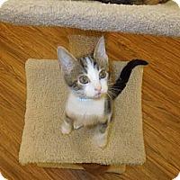Adopt A Pet :: Silas - Medina, OH