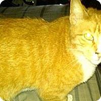 Adopt A Pet :: Sunny - Oxford, NY