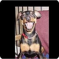 Adopt A Pet :: Alfonzo - Phoenix, AZ