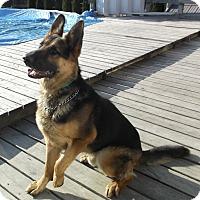 Adopt A Pet :: Radar - Evergreen Park, IL