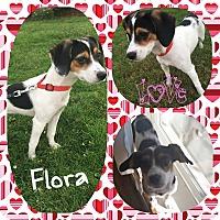 Adopt A Pet :: Flora - DOVER, OH