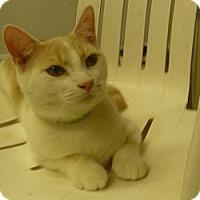 Adopt A Pet :: Harper - Hamburg, NY