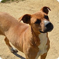 Adopt A Pet :: Stacy - Charlemont, MA