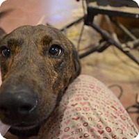 Adopt A Pet :: Ruby - ROME, NY