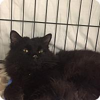 Adopt A Pet :: Puffer - Warwick, RI