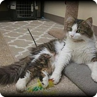 Adopt A Pet :: Beatrice - Balto, MD