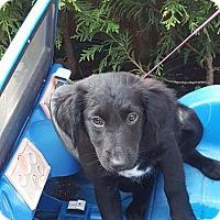 Adopt A Pet :: Zeus - West Bend, WI