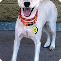 Adopt A Pet :: White Cap - Gilbert, AZ