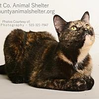 Adopt A Pet :: Elizabeth - Estherville, IA