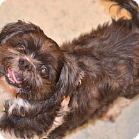 Adopt A Pet :: Kota-ADOPTION PENDING - Boulder, CO