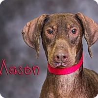 Adopt A Pet :: Mason - Somerset, PA