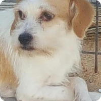 Adopt A Pet :: Pablo - Mary Esther, FL