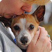 Adopt A Pet :: Papito - Philadelphia, PA
