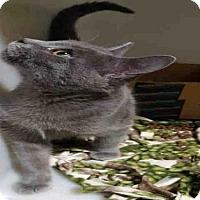 Adopt A Pet :: CINDER - Bakersfield, CA