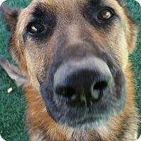 Adopt A Pet :: Remmi - Chula Vista, CA