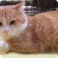 Adopt A Pet :: Butterscotch - Columbus, OH
